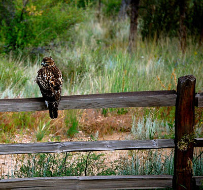 Photograph - Bird Of Prey by Sherlyn Morefield Gregg