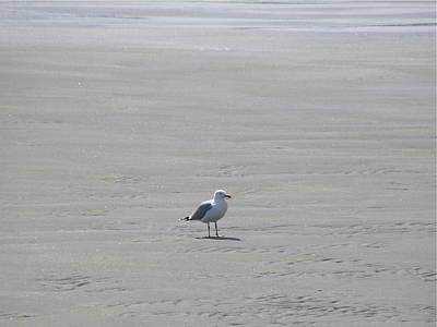 Photograph - Bird On A Beach by Denise Mazzocco