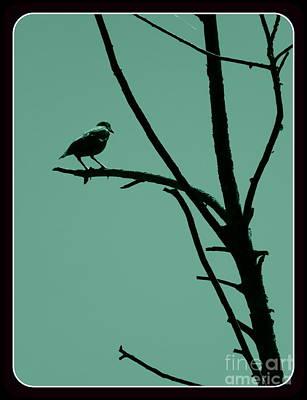Photograph - Bird On A Branch by Avis  Noelle