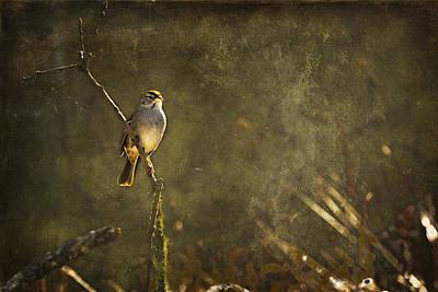 Bird On A Branch Print by Belinda Greb