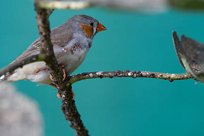 Art Print featuring the photograph Bird On A Branch by John Hoey