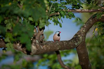 Photograph - Bird On A Branch by Paul Johnson