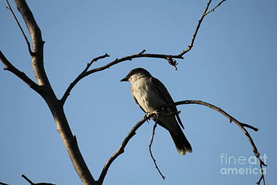 Photograph - Bird On A Branch View 2 by Donna Munro