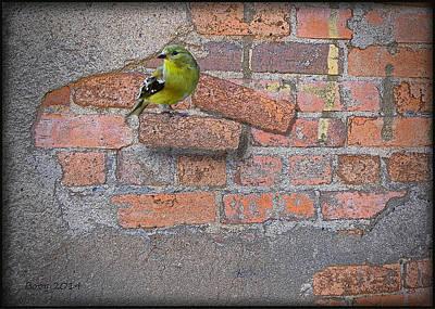 Bird On A Brick Art Print by Larry Bishop