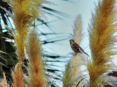 Photograph - Bird On A Feather by Cathy Jourdan