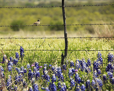 Photograph - Bird On A Fence by Charles McKelroy