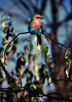 Photograph - Bird On A Limb by Steve Karol