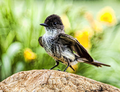 Photograph - Bird On A Rock by John Crothers