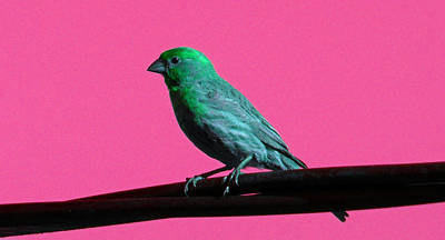 Photograph - Bird On A Wire 2 by Laurie Tsemak