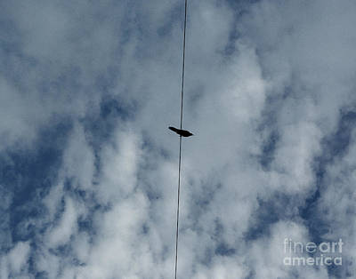 Photograph - Bird On A Wire by Peter Piatt