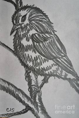Drawing - Bird On Branch by Cecilia Stevens