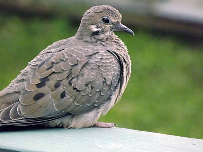 Photograph - Bird On Deck by Jeanne Donnelly