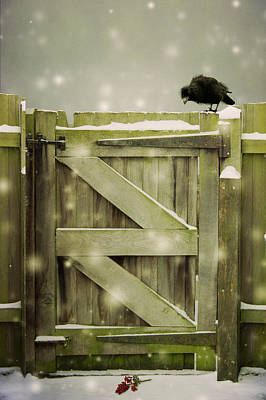 Photograph - Bird On Gate by Ethiriel  Photography