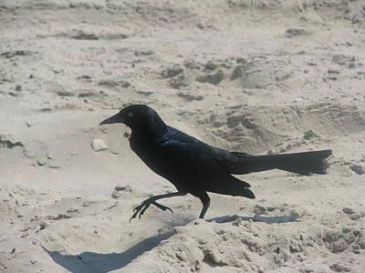 Katharine Hepburn - Bird on Hot Sand by Michelle Ashman