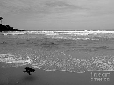 Bird On Kovalam Beach Art Print