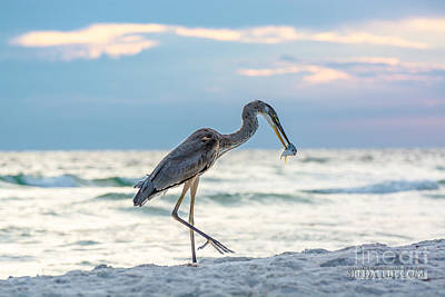 Bird On Panama City Beach Original by Joe Spedale jr