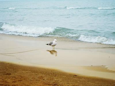 Photograph - Bird On The Beach by Milena Ilieva