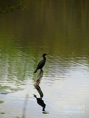 Bird On The Lake Print by Avis  Noelle