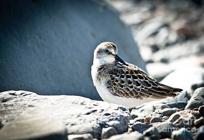 Photograph - Bird On The Rocks by Cheryl Baxter