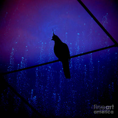 Bird On The Wire ... Art Print by Chris Armytage