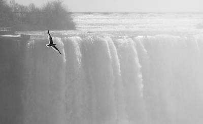 Photograph - Bird Over Niagara Falls by Arkady Kunysz