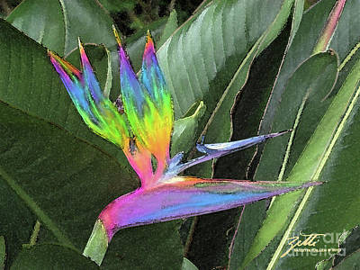 Photograph - Bird Ow  Paradise by Suzette Kallen