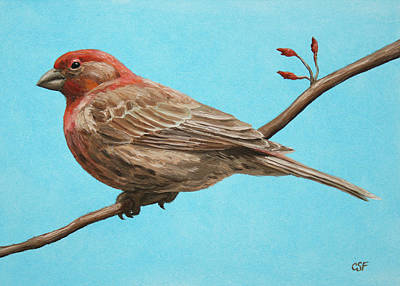 Red Finch Painting - Bird Painting - House Finch by Crista Forest