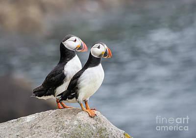 Photograph - Bird Paradise by Evelina Kremsdorf