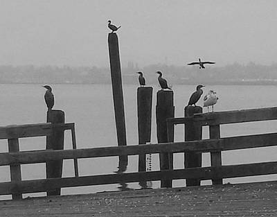 Bird Party In Black And White Art Print by Karen Molenaar Terrell