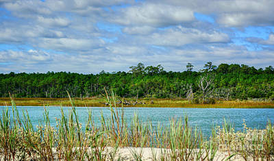 Photograph - Bird Sanctuary by Kathy Baccari