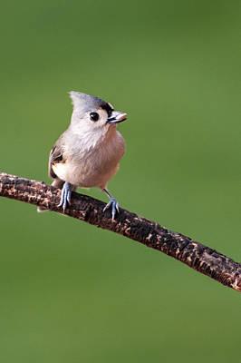 Photograph - Bird Seed by Paul Johnson