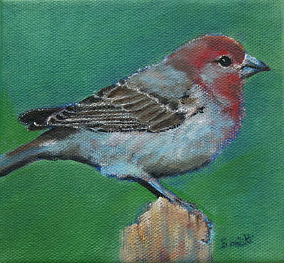 Painting - Bird Series House Finch by Carol Jo Smidt