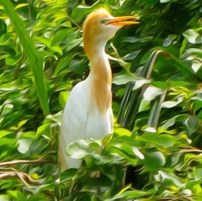 Baby Bird Photograph -  Egret by Art Spectrum
