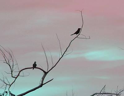 Beak Photograph - Bird Silhouette 3  by Cathy Lindsey