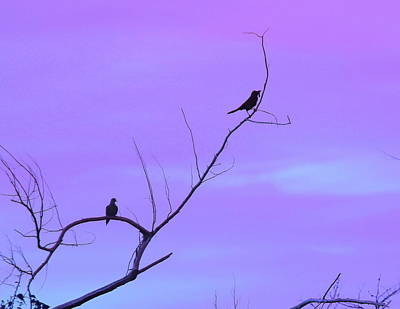 Wings Photograph - Bird Silhouette 4 by Cathy Lindsey