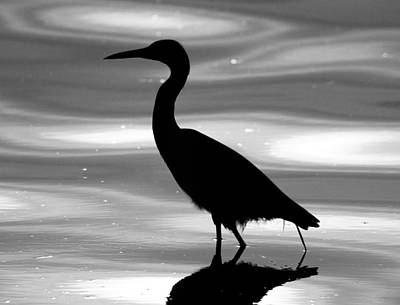 Photograph - Bird Silhouette by Daniel Woodrum