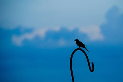 Photograph - Bird Silhouette  by Dee Dee  Whittle