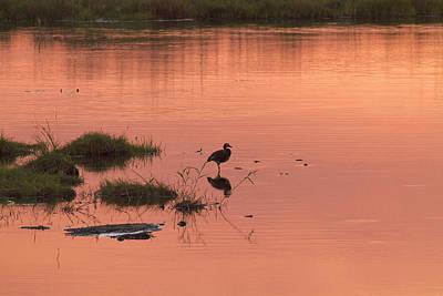 Photograph - Bird Silhouette  by Gigi Ebert