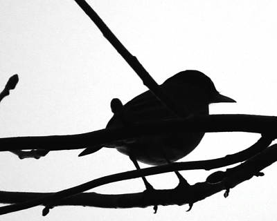 Birds Photograph - Bird Silhouette by Scott Cameron