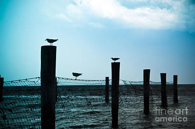Beach Royalty-Free and Rights-Managed Images - Bird Silhouettes by Tim Hester