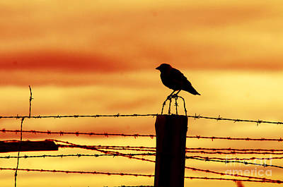 Barbed Photograph - Bird Sitting On Prison Fence by Michal Bednarek