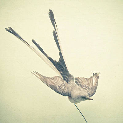 Bird Study No1 Art Print