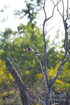 Photograph - Bird Takeoff by Donna Munro