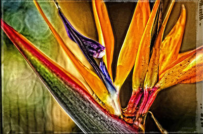 Sarasota Photograph - Bird Talk - Bird Of Paradise By Sharon Cummings by Sharon Cummings