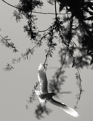Photograph - Bird  by Tin Lung Chao