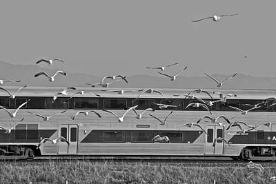 Alviso Photograph - Bird Train Alviso 2 by SC Heffner