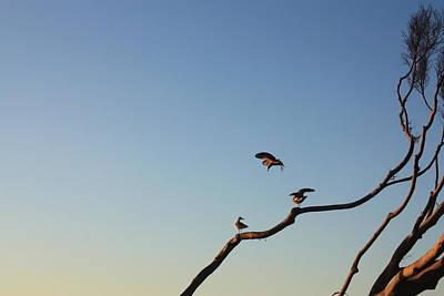 Photograph - Bird Trio by Daniel Schubarth