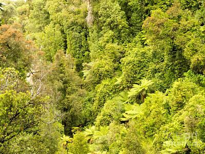 Bird View Of Lush Green Sub-tropical Nz Rainforest Art Print by Stephan Pietzko