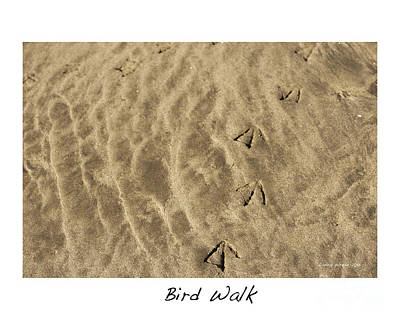 Photograph - Bird Walk by Artist and Photographer Laura Wrede