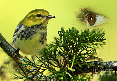 Bird Watching Art Print by Inspired Nature Photography Fine Art Photography